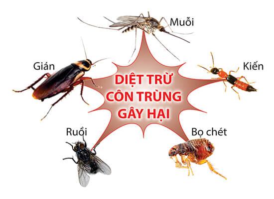 dịch vụ diệt côn trùng tại nhà TPHCM