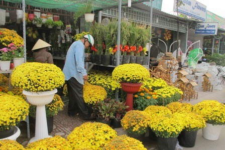 chợ hoa tết Nguyên Đán 2017 ở TPHCM