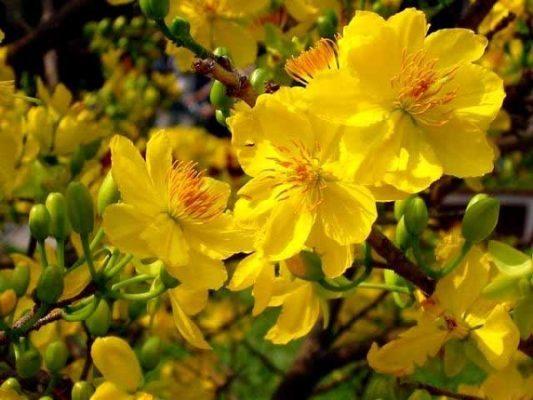 10 loại hoa trong nhà ngày Tết mang lại may mắn cho gia chủ