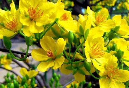 loài hoa nên trưng bày vào những ngày Tết