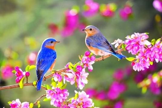ca khúc bất hủ về mùa xuân
