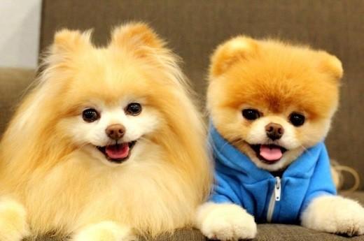 phụ kiện cho thú cưng ở TPHCM