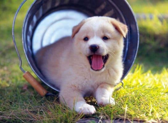 Top 10 loại thú cưng nuôi trong nhà nhiều nhất