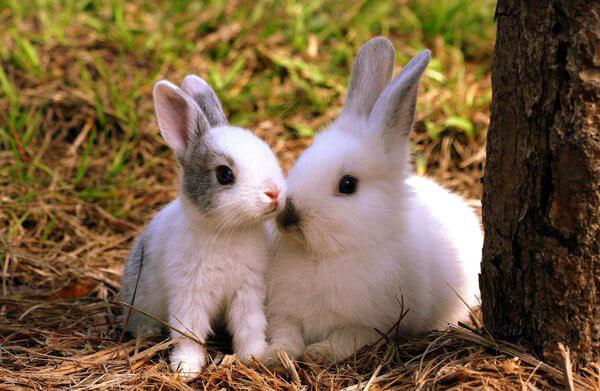 Thỏ- thú cưng nuôi trong nhà nhiều nhất