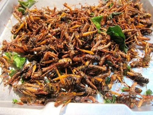 Bọ xít, châu chấu rang món ăn độc đáo nhất Việt Nam