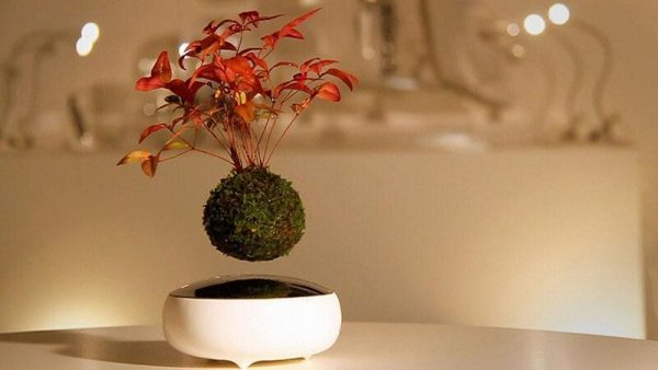 mua bonsai bay ở đâu