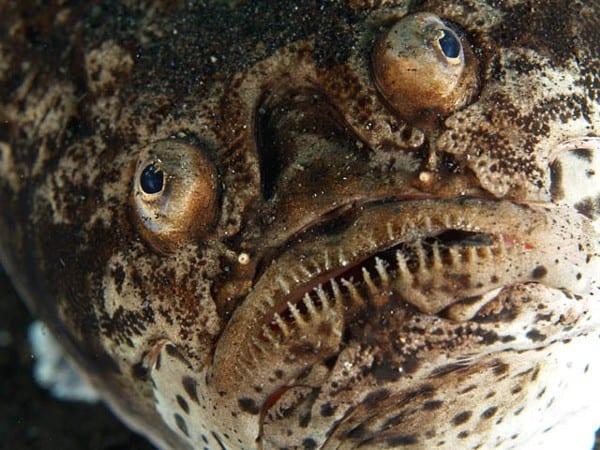 Cá chiêm tinh