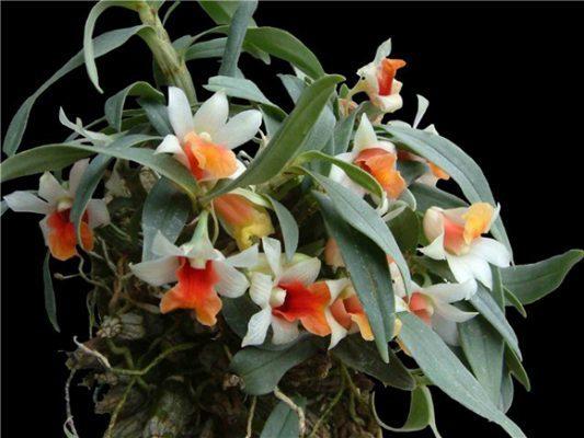 fanpage bán hoa lan rừng tại TPHCM