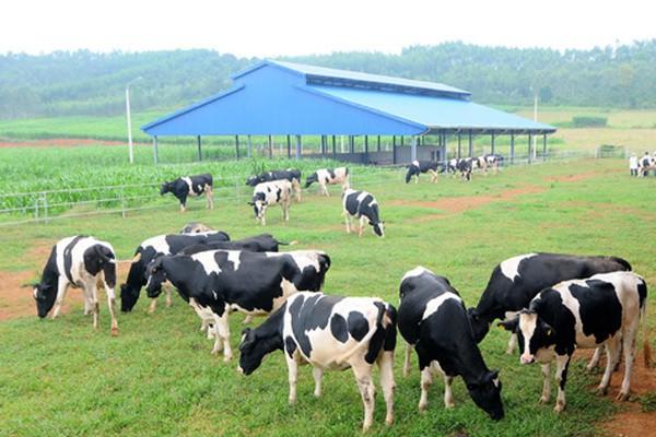 Mô hình chăn nuôi độc đáo tại Việt Nam