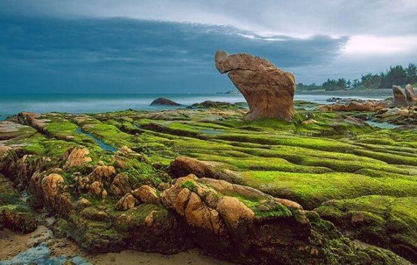 Lớp rêu xanh huyền bí trên đá ở bãi biển Cổ Thạch- Bình Thuận