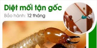 Top 5 dịch vụ diệt mối, diệt muỗi, diệt côn trùng tại nhà ở Hà Nội