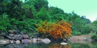 con suối đẹp nhất ở Việt Nam