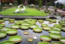địa điểm du lịch nổi tiếng tại Đồng Tháp