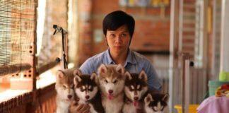 shop cung cấp thú cưng giá rẻ tại Hà Nội