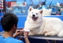 shop mua bán thú cưng ở TPHCM