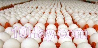 trứng gia cầm sạch