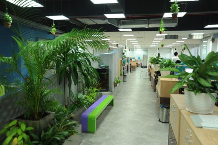 Cây xanh văn phòng rẻ và đẹp tại Hà Nội