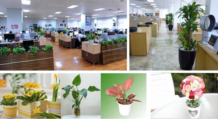 cây xanh văn phòng rẻ và đẹp tại TPHCM