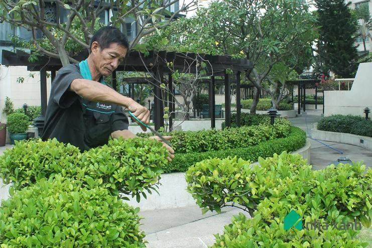 Công Ty Cây Xanh Việt